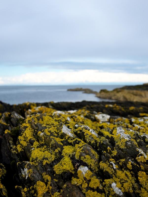 lichen H'bay
