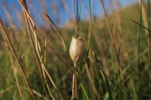 seed pod shoreline