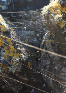 spiderwebs between rocks