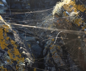 spiderwebs coastline