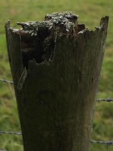 fencepost 5